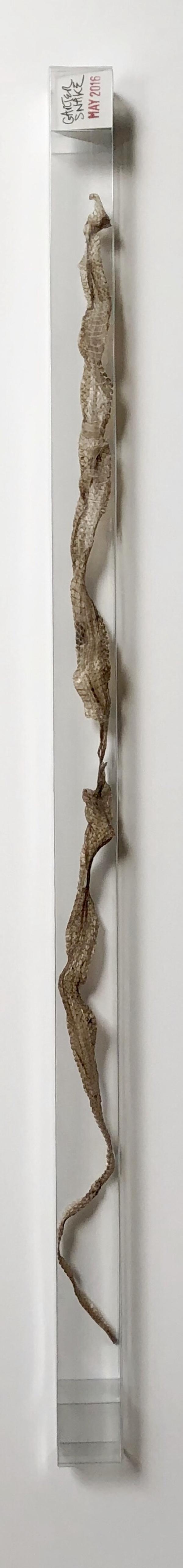 2016 05 garter snake skin.jpeg