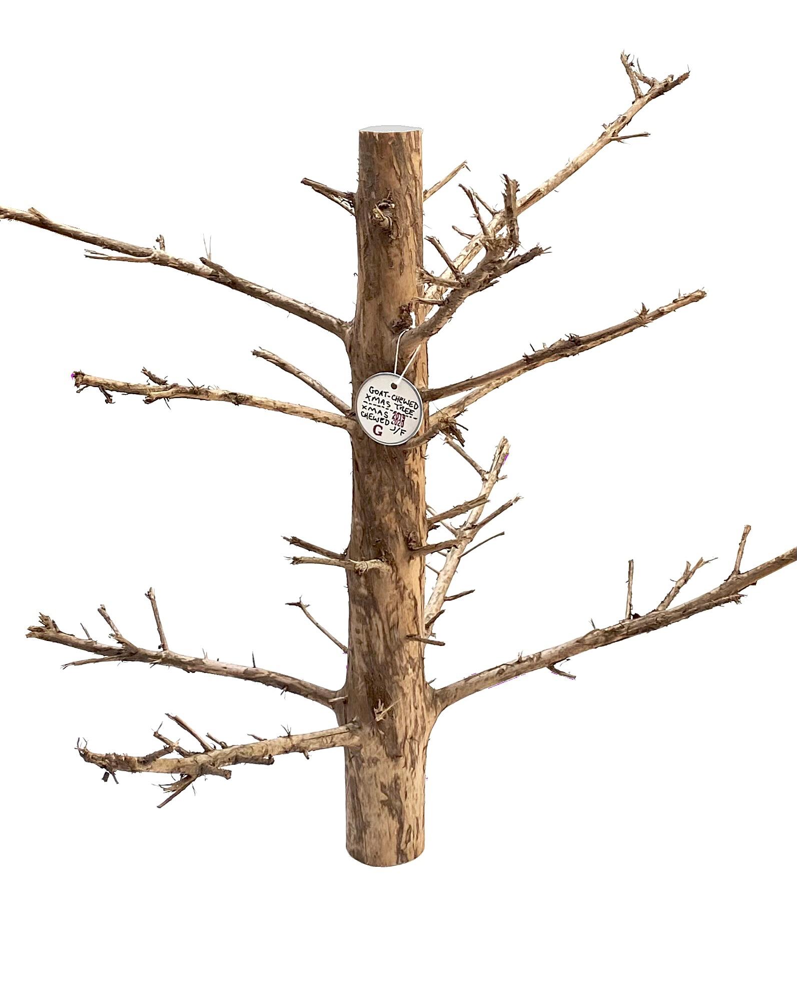 2019 - 2020 goat-chewed xmas tree